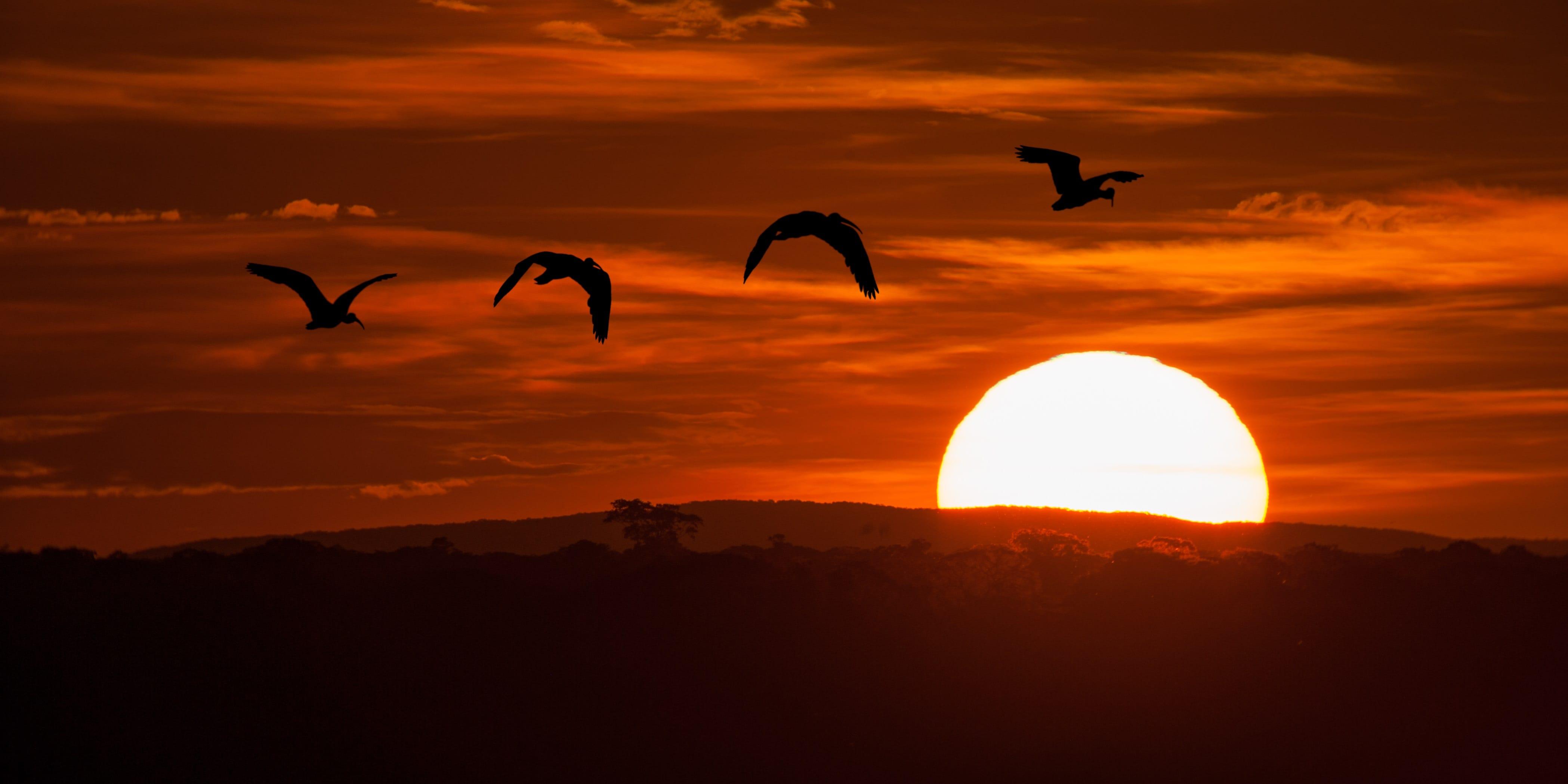 Brazilie Pantanal zonsondergang
