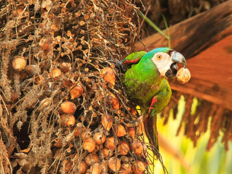 Macaw Bij De Cristalino Lodge