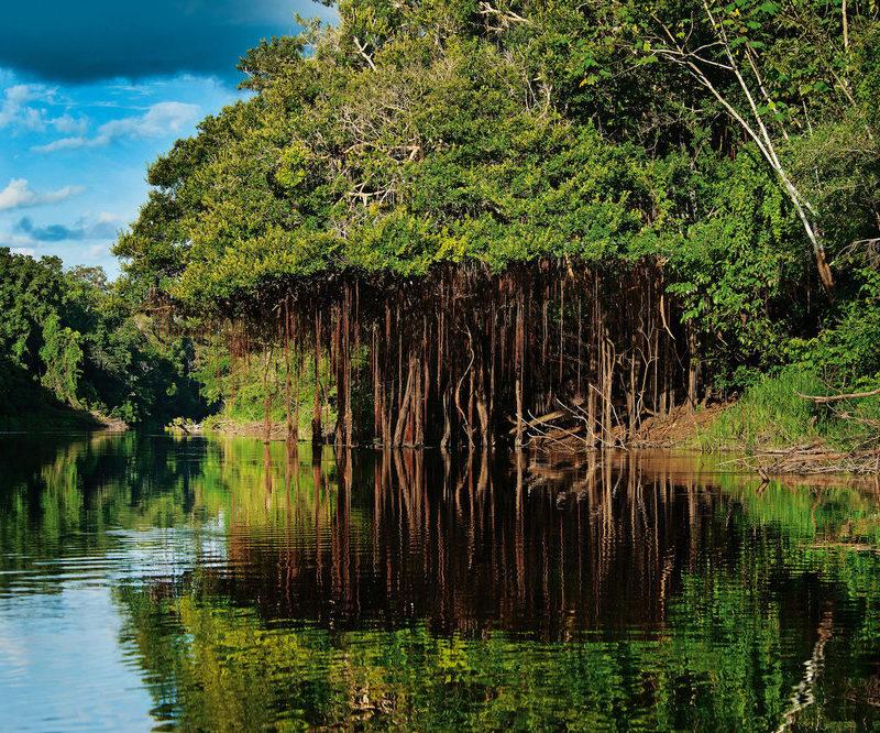 Amazone Gebied Van Peru
