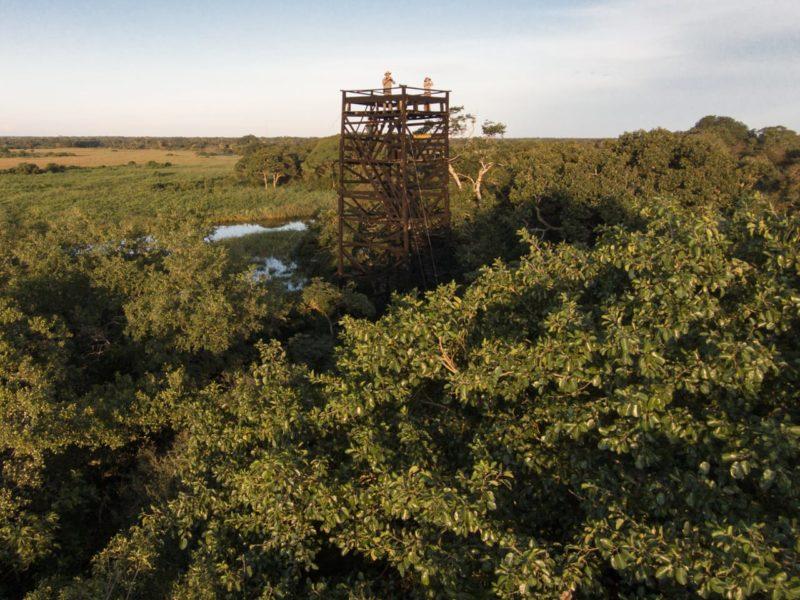 Vanaf De Uitkijktoren Spot U Wildlife In De Pantanal