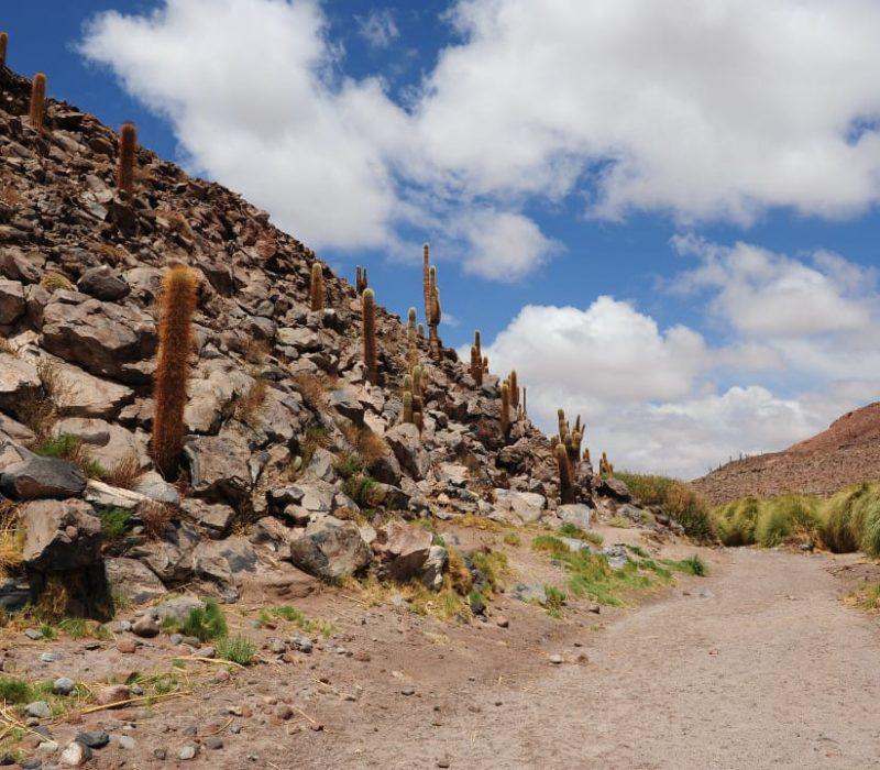 Noord Argentinië Cactussen