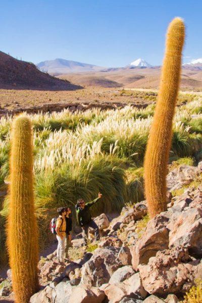 Chili Wandelen Door De Atacama Woestijn