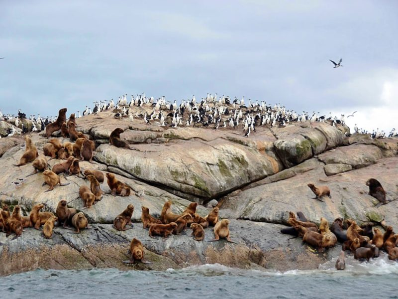 Zeeleeuwen En Zeevogels In Chili
