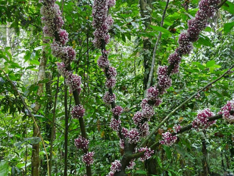 Bloemen In De Amazone