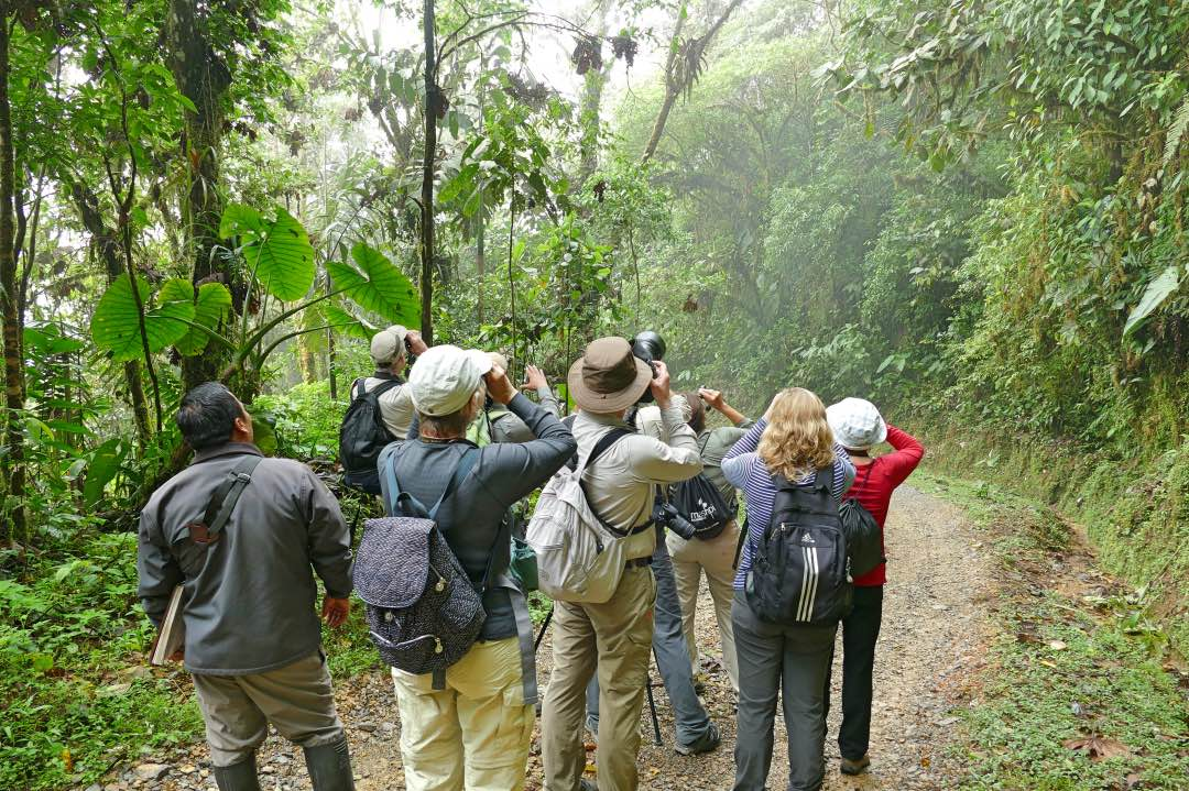 Vogels spotten in het nevelwoud in Ecuador