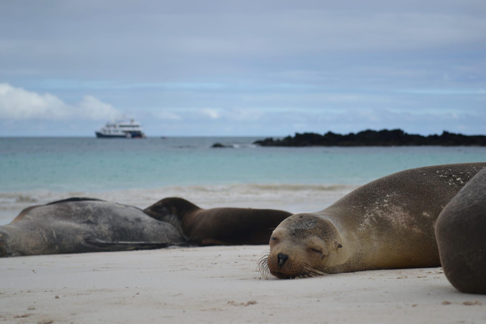 Galapagoscruise zeeleeuwen