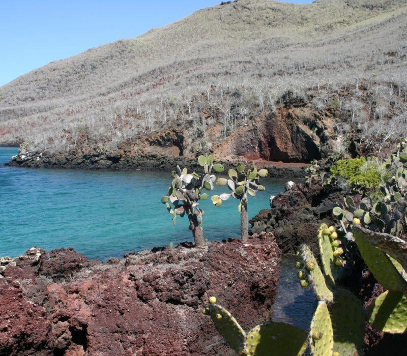 Galapagos Expeditie Opuntia