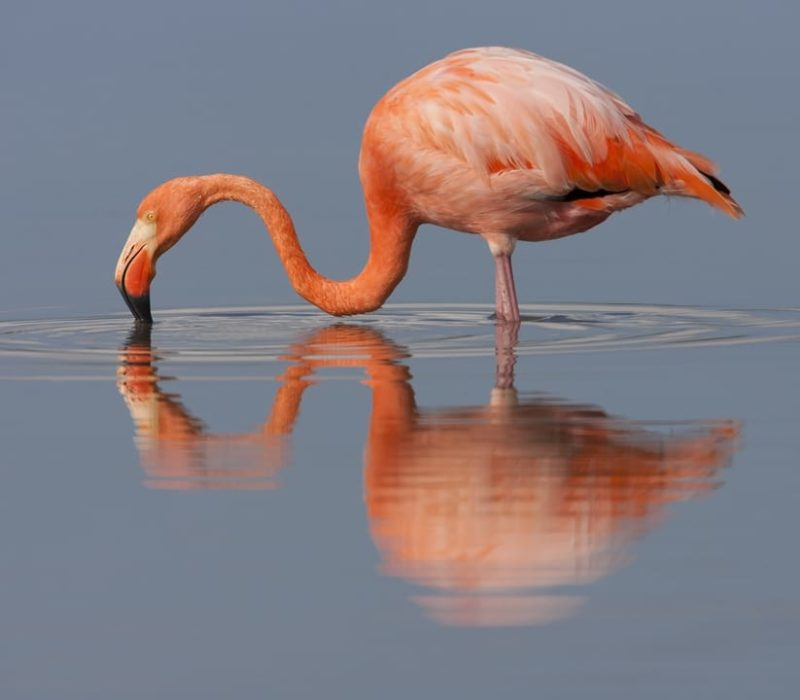 Luxe Reis Galapagos Flamingo Op Isabela