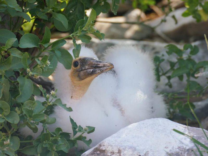 Reizen Naar De Galapagos