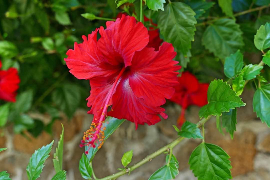 Galapagos_Santa_Cruz_Bloem