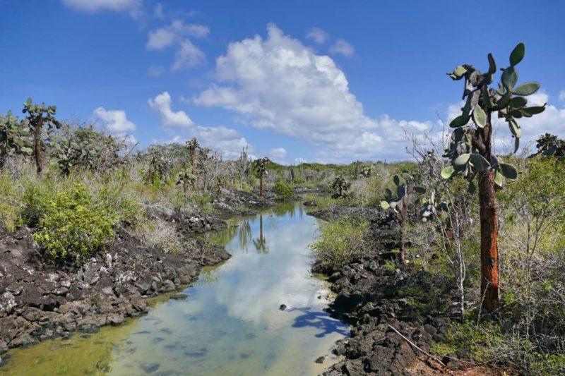 Galapagos_Santa_Cruz_Palo_Santo
