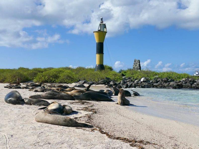 Vuurtoren En Zeeleeuwen Op De Galapagos