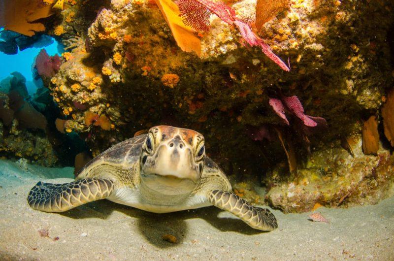 Mexico Baja California Zeeschildpad