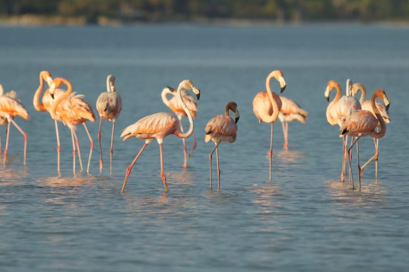 Merida Celestun Roze Flamingo's