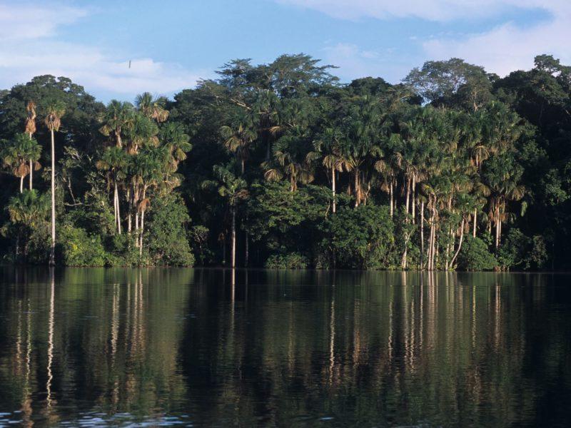 Iquitos In De Amazone Van Peru