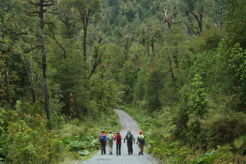 Wandelen Door Het Bos In Chili