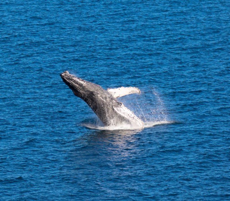Natuurreis Mexico Walvissen Spotten Baja California