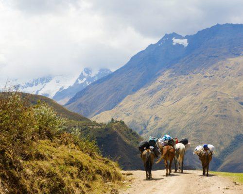 Peru Trekking Machu Picchu Met Paarden