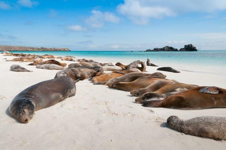 Zeeleeuwen Op De Galapagos