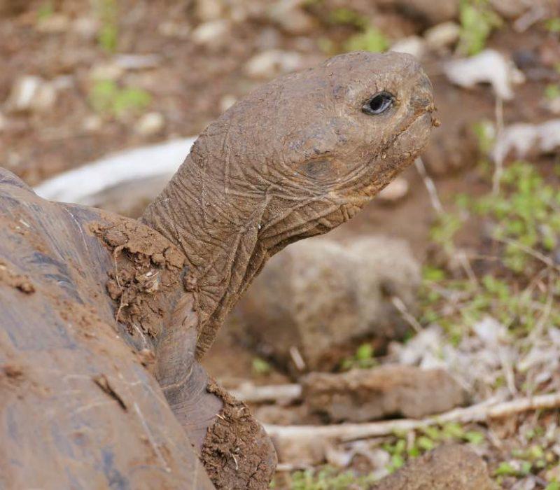 Galapaguera San Cristobal