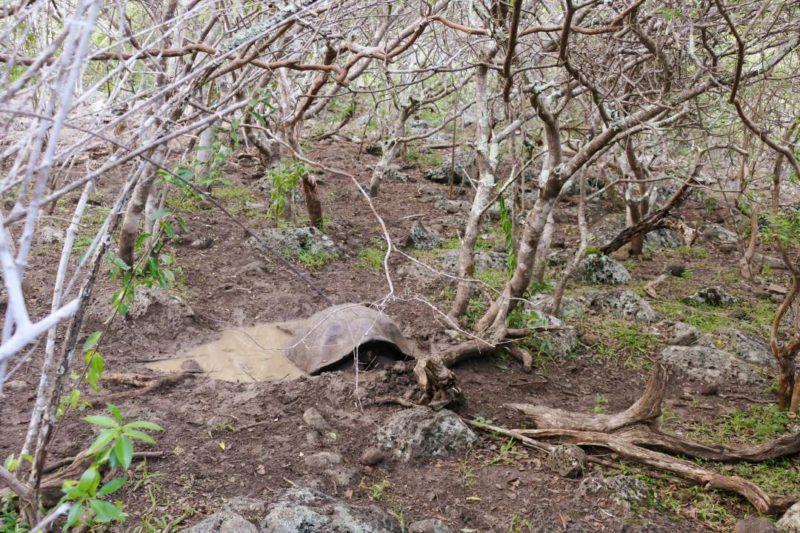 Galapagos_San_Cristobal_Reuzenschildpad_Meer
