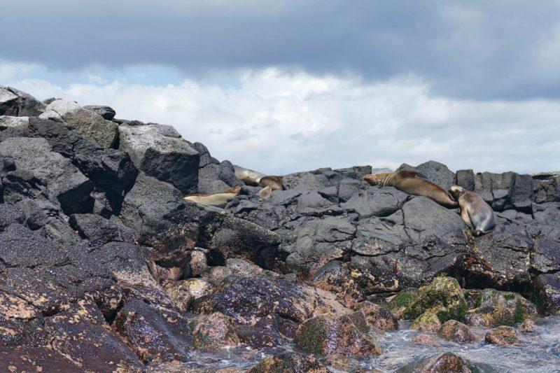 Zeeleeuwen Op De Rotsen