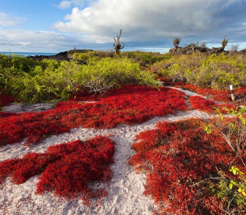 Duikvakantie Galapagos Sierra Negra Vulkaan