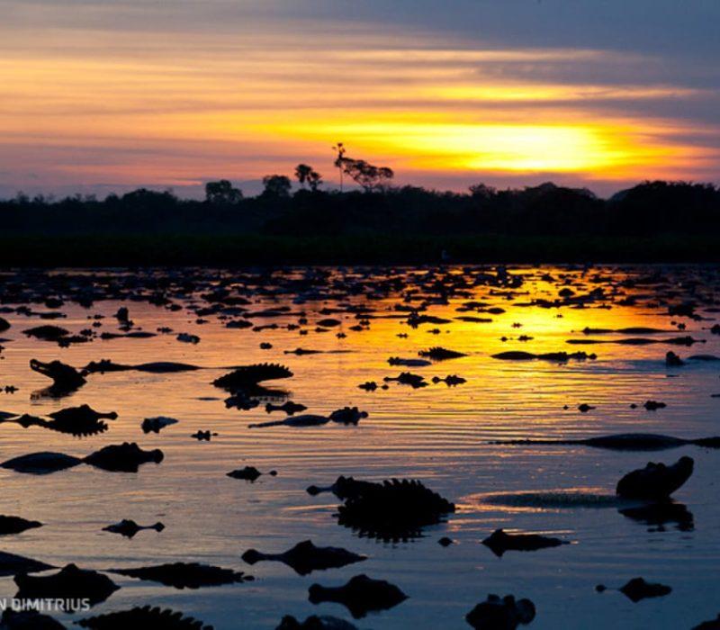 Brazilië Pantanal Zonsondergang Met Krokodillen