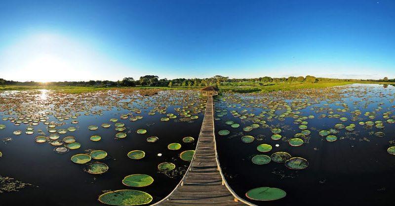 Reizen Door Brazilië Pantanal