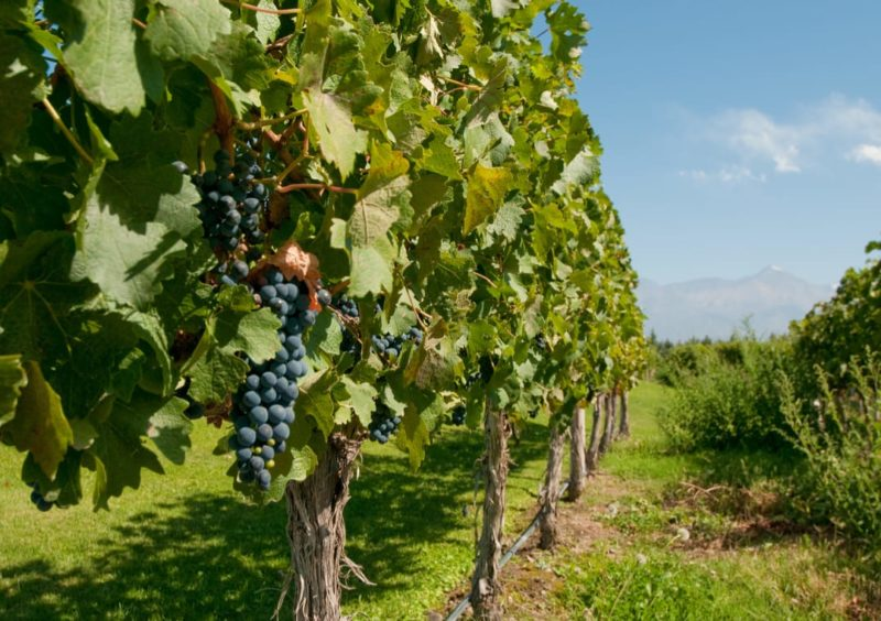 De Beste Wijnstreek Van Argentinië Mendoza