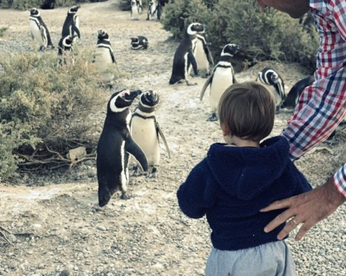 Pinguïns Kijken Op De Peninsula Valdes