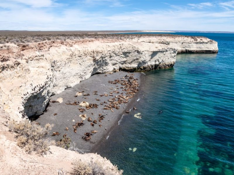 Argentinië Puerto Madryn Pinguïnkolonie