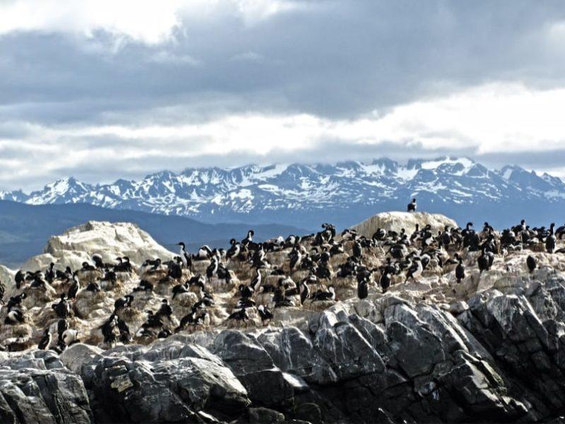 Argentinië Ushuaia Pinguïn Kolonie