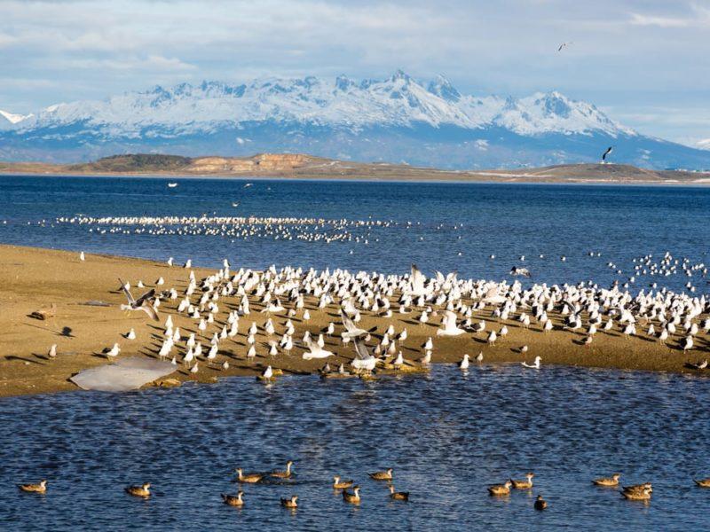 Natuurreis Argentinië Ushuaia