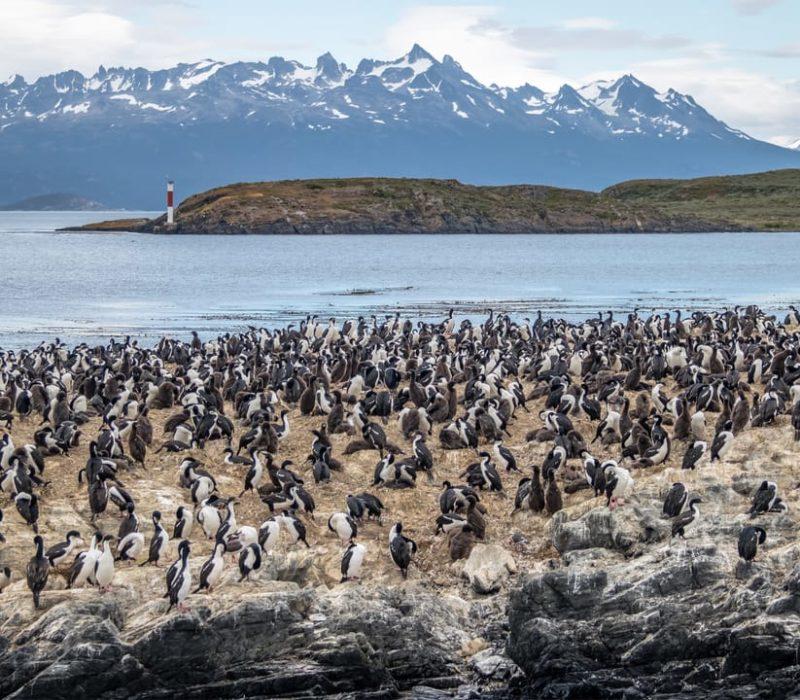 Natuurreis Argentinië Pinguïnkolonie