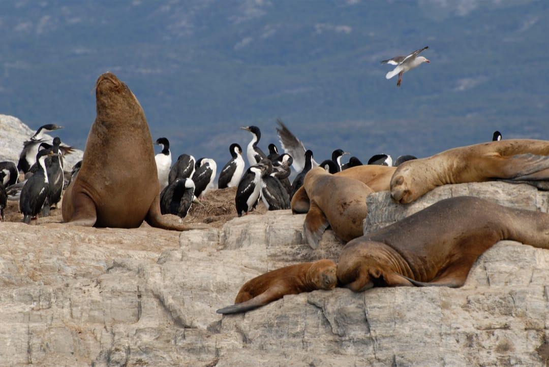Argentinië Ushuaia zeeleeuwen