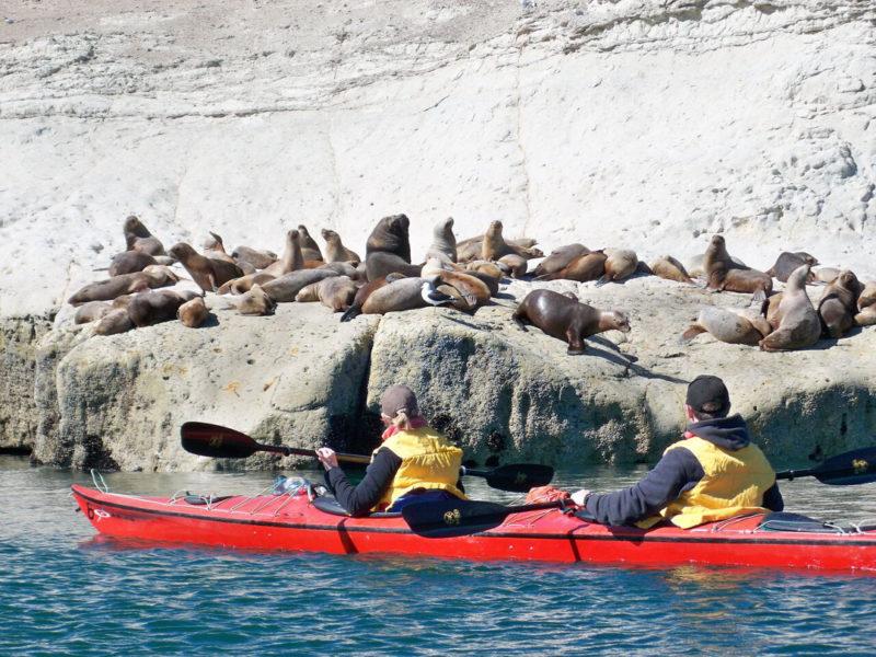 Argentinië_Peninsula_Valdes_Kayaking_zeeleeuwen
