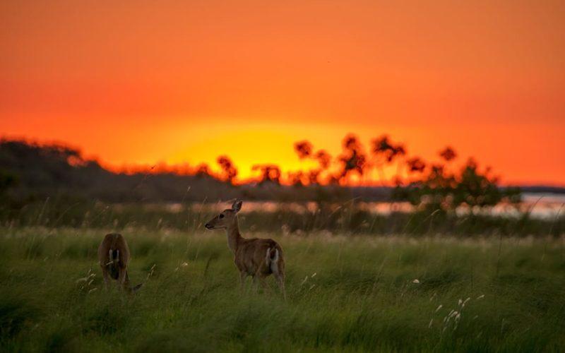 Moerasherten Op Safari In Noord Argentinië
