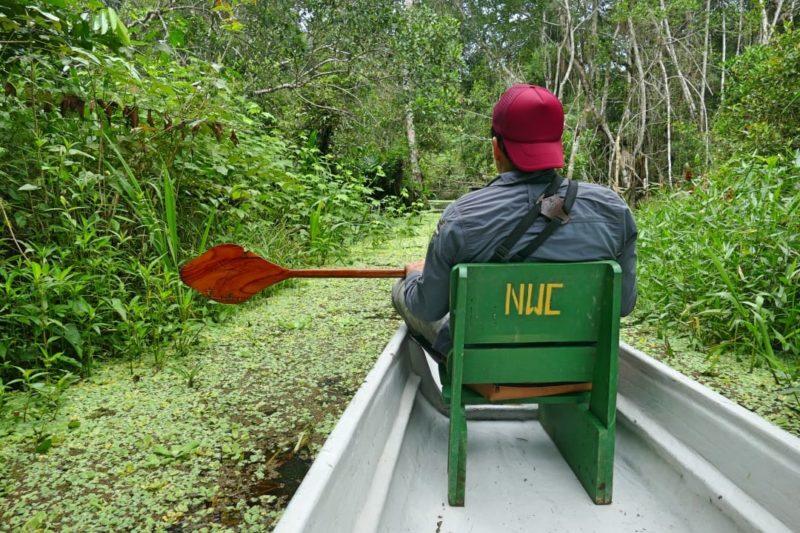 Ecuador Napo Wildlife Center Peddelkano