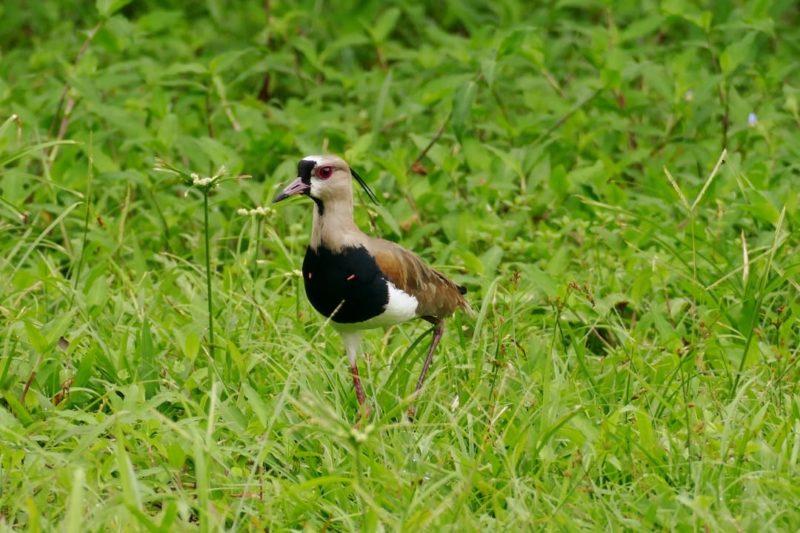 Droomreis Naar De Amazone Van Ecuador Vogel