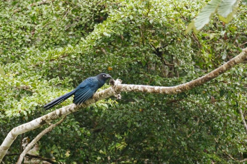 Ecuador Napo Wildlife Center Vogel