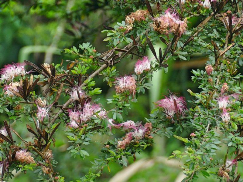 Bloemen In De Amazone In Ecuador