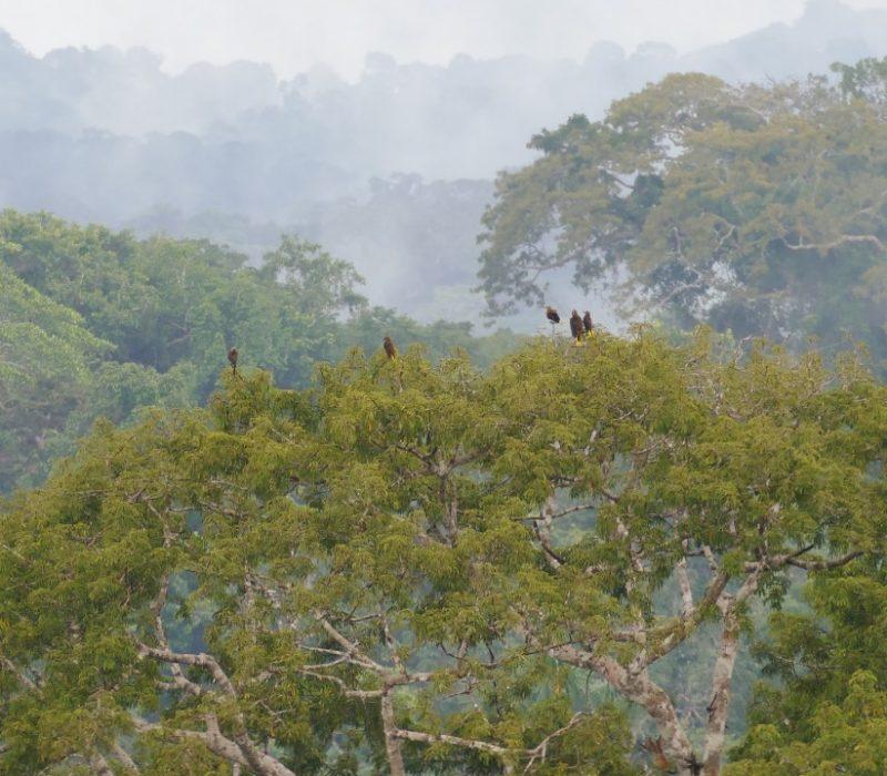 De Amazone In Ecuador