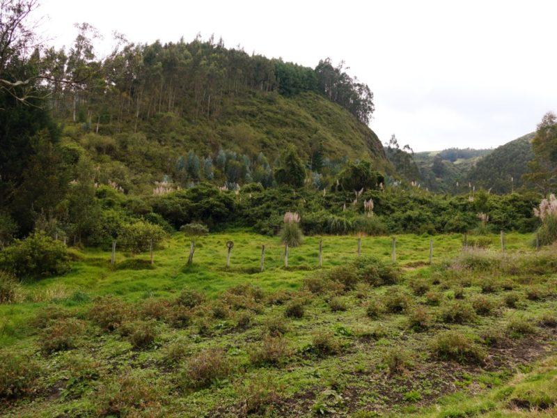 Het Andesgebergte In Ecuador