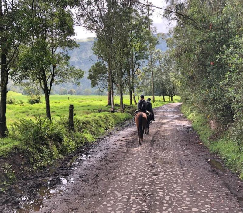 Paardrijden In Ecuador