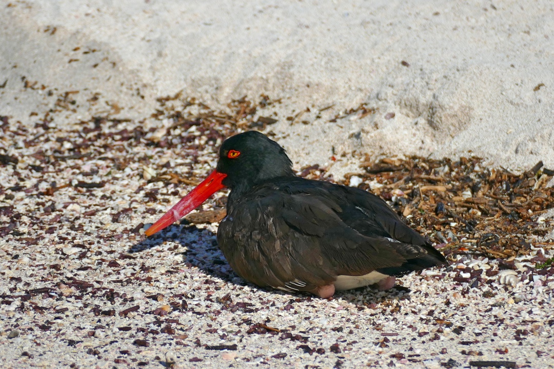 Zeevogel op de Galapagos
