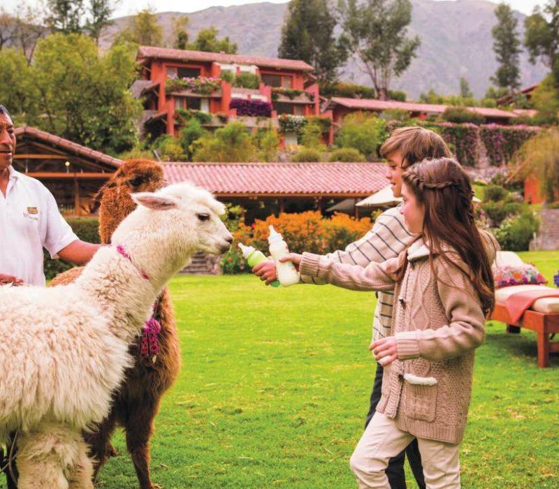 Familiereis In Peru Lamas Met Kinderen