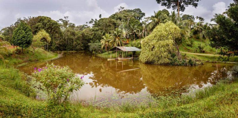 Natuurgebied Boca Tapada In Costa Rica