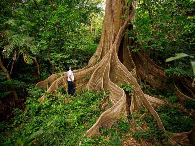 Regenwoud In Costa Rica