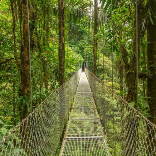 Hangende Bruggen In Monteverde Costa Rica